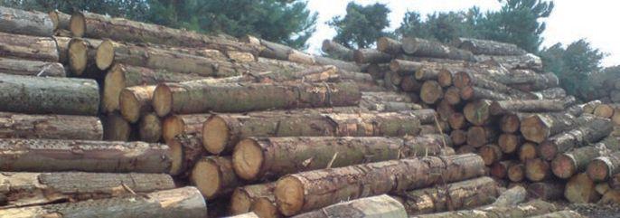Ocena ryzyka zawodowego na stanowisku pracownika obróbki drewna w tartaku