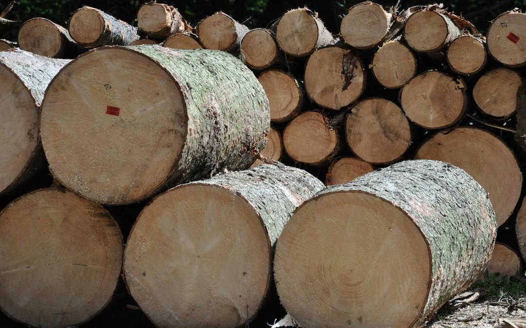 Wycinka drzew na terenach zamieszkałych