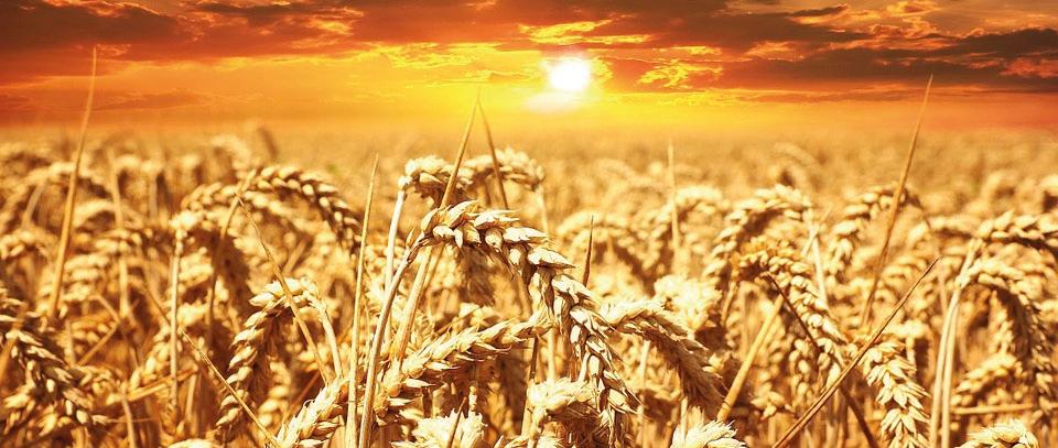 Magazynowanie i przetwórstwo zbóż