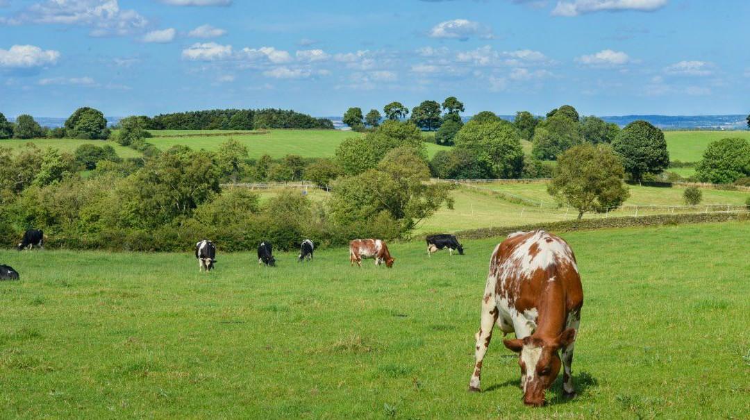 Ocena ryzyka zawodowego dla prac w gospodarstwie mleczarskim
